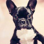 PETS: especialista explica peculiaridades de cada raça