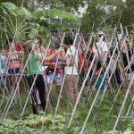 SAFRA da tainha anima pescadores do Campeche e Sul da Ilha