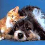 CONVÍVIO com animais contribui para melhorar qualidade de vida