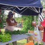 HORTA comunitária do bairro faz doação de hortaliças aos sábados